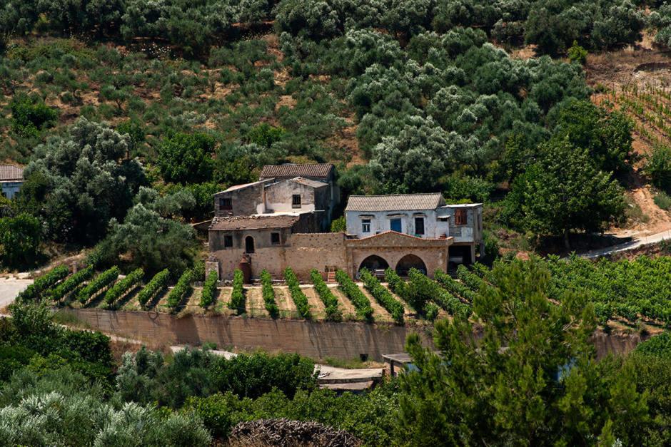 Visit Cretan Wineries