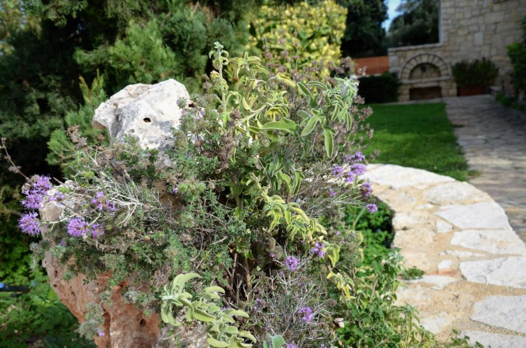 Herbs of Crete - Amazing villas in Crete